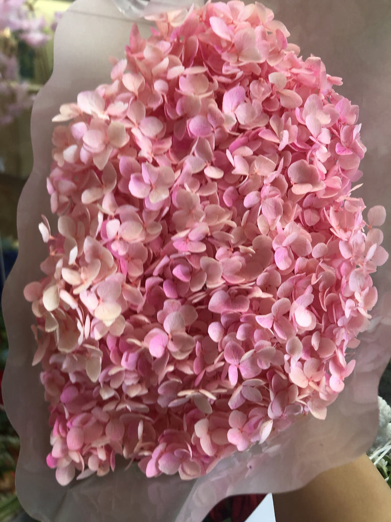 Single stem preserved Hydrangea pink