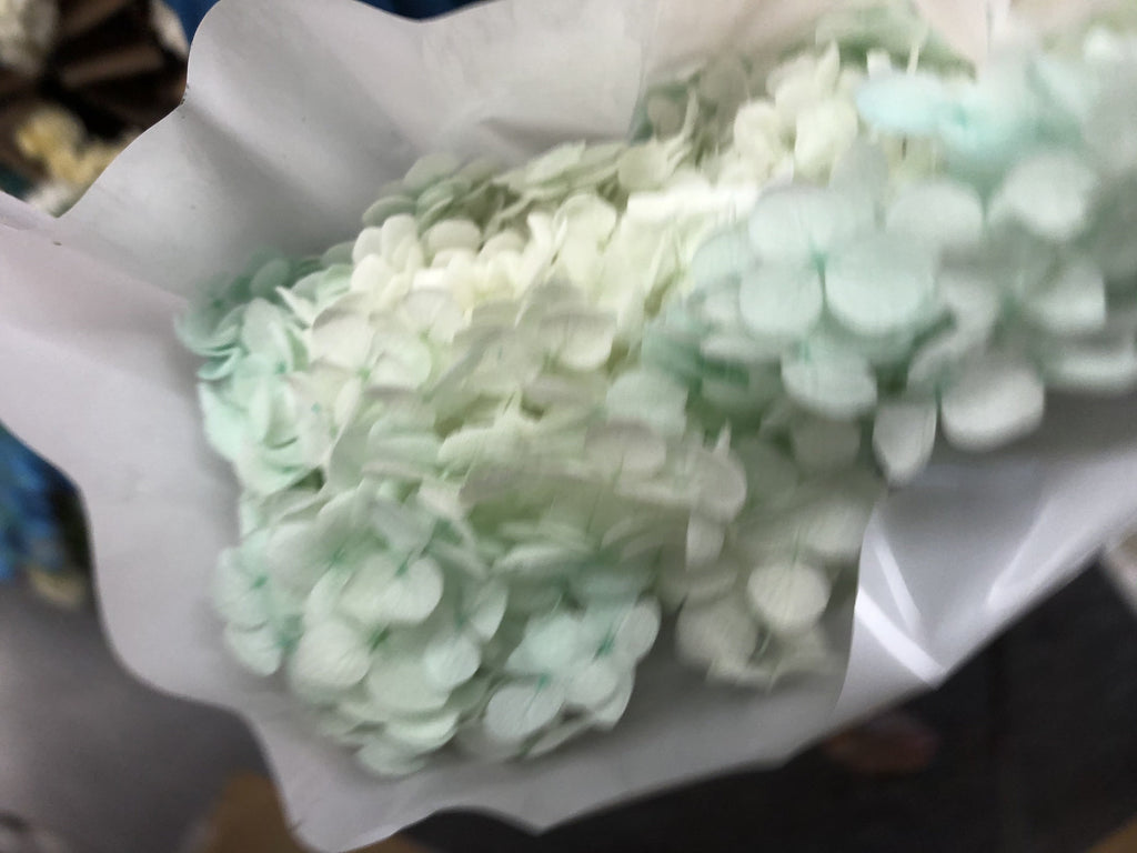 Single stem preserved Hydrangea Tiffany blue