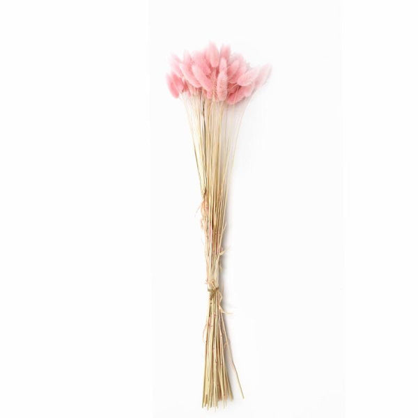 Dried Light Pink Lagurus Bunny Tail grass (bundle of 50)