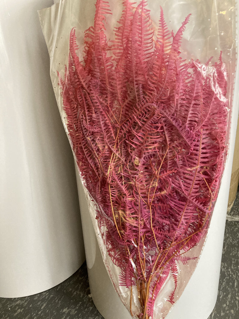 Preserved Bundle of Fern Pink