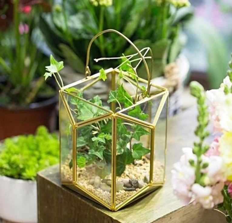 "Mini Gold Lantern Small (6.3"" terrarium)"