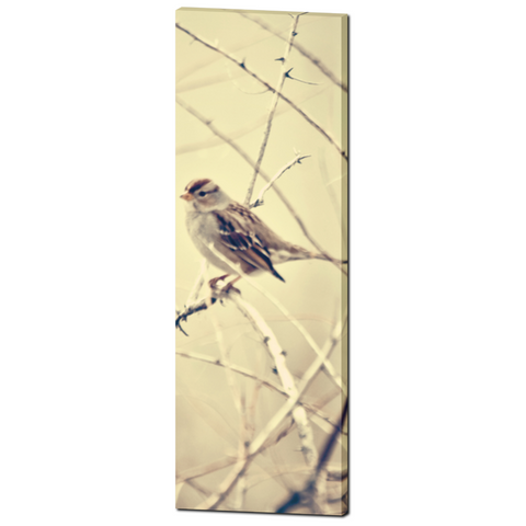 Sepia Bird Canvas - Large Canvas - 20 x 60 Canvas - Nature Canvas - Tan Brown Canvas - Bird Photo Canvas - Gallery Wrapped - Tall Canvas - Sylvia Coomes