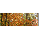 Large Canvas - Nature Canvas - Panoramic Wall Art - Panoramic Canvas - Orange Green - Autumn - Tree Canvas - 20 x 60 Canvas - Woodlands - Sylvia Coomes