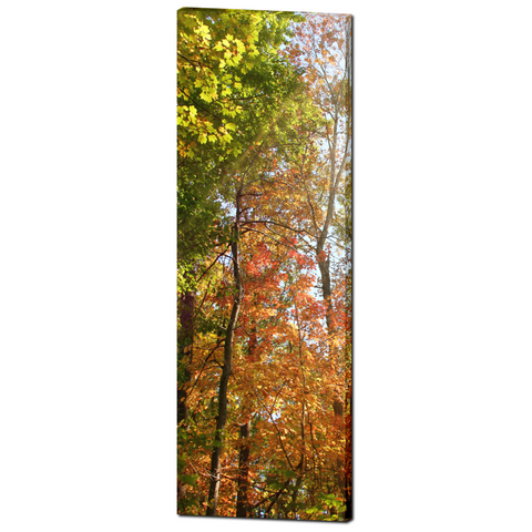Tree Canvas - Large Canvas - Nature Canvas - Large Wall Art - Fall Trees - Orange Green - Autumn - 20 x 60 Canvas - Woodlands