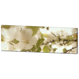 Cottage Chic Decor - White Flowers Canvas - Panoramic Canvas - White and Green - Large Canvas - Large Floral Art - 20 x 60 Canvas - Sylvia Coomes