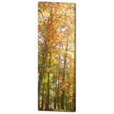 Autumn Trees Canvas - Large Canvas - Nature Canvas - Large Wall Art - Fall Trees - Orange Green - Rustic - 20 x 60 Canvas - Woodlands - Sylvia Coomes