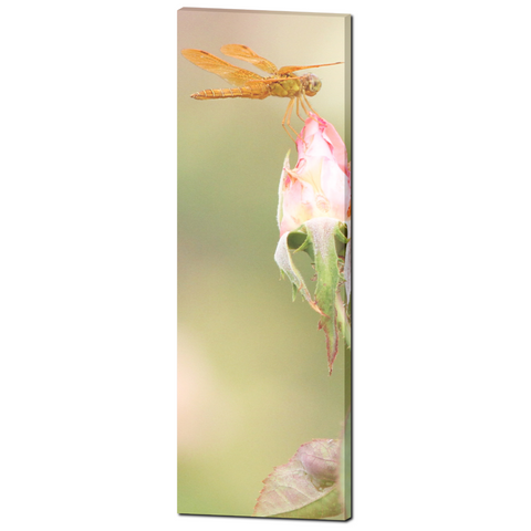 Flowers 18 Fine Art Photography 20 x 60 x 1.25 inch Premium Canvas Gallery Wrap - Sylvia Coomes