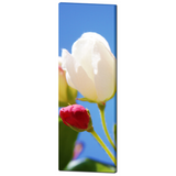 Bright Flowers 2 Fine Art Photography  20 x 60 x 1.25 inch Premium Canvas Gallery Wrap - Sylvia Coomes