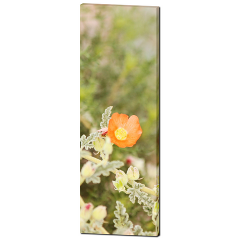 Orange and Green Canvas - Large Canvas - Arizona Art - Tall Canvas - Wild Flowers Canvas - Southwest Photo - 20 x 60 Canvas - Sylvia Coomes