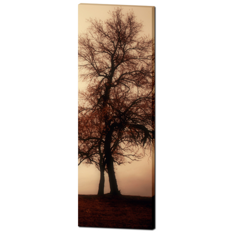 Gothic Tree Canvas - Large Modern Canvas - Tall Canvas - Rust and Tan - Rustic Canvas - Large Canvas - Abstract Tree Art - 20 x 60 Canvas - Sylvia Coomes