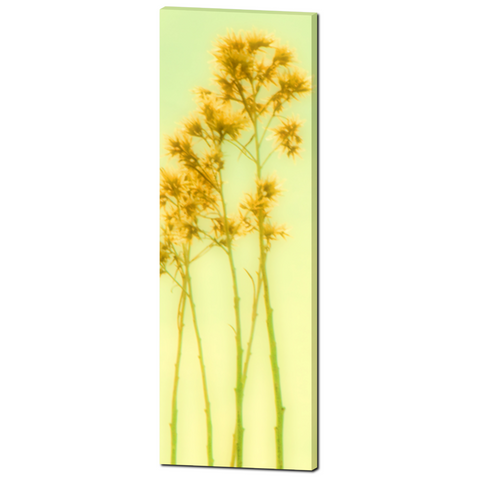 Yellow Flower Canvas - Artistic Blur - Yellow Green - Home Decor - Tall Canvas - Floral Stems - Fine Art - Large Canvas - 20 x 60 Canvas - Sylvia Coomes