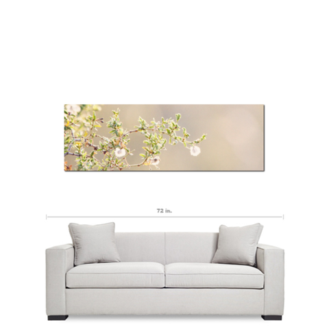 Minimalist Canvas - Large canvas - Desert Flowers - Modern Photo - Large Wall Art - Ethereal Canvas - Green and Tan - 20 x 60 Canvas - Sylvia Coomes