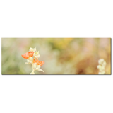 Orange Tan Green Canvas - Large Canvas - Desert Flowers Art - Minimalist Canvas - Wild Flowers Canvas - Southwest Photo - 20 x 60 Canvas
