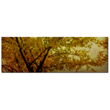 Changing Fine Art Photography Panoramic 20 x 60 x 1.25 inch Premium Canvas Gallery Wrap - Sylvia Coomes