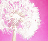 Hot Pink Dandelion Tapestry