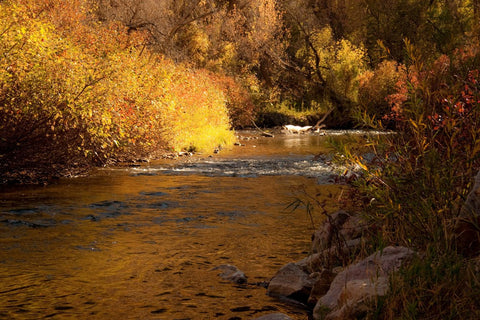 Beautiful Rustic Fall Foliage with Shades of Gold rust orange River flow Metallic Art Photo photography photograph mustard yellow gold brown