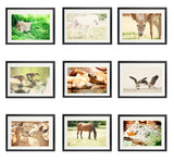 Animal Collection 9 Fine Art Photography Metallic photo wall Print animal ducks geese deer horse wolf grizzly bears nature cabin home decor