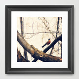 Bird Photography - Robin Red Breast - Earth Tone photograph - Nature Photo - wall Print - home decor - cottage chic