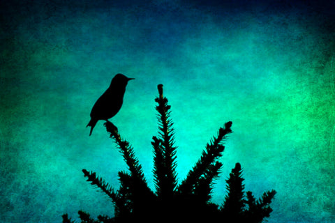 Bird photograph - Nursery bird Art - Silhouette Photography - Teal and Black - Aqua and Black - Textured Photo - wall Print - home decor