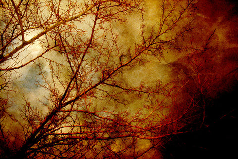 Tree photo - Rust and Gold photograph - Gothic Red Tree Photography - Nature Wall Print - wall Print - home decor