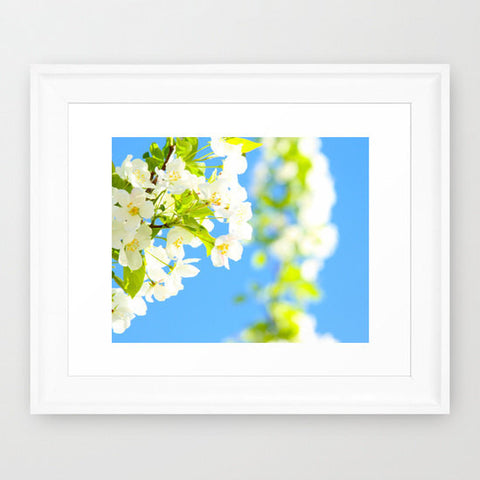 Flower Photography - Nature Wall Print - Sky Blue and Lime Green photograph - White Flowers photo - wall Print - home decor - Sylvia Coomes