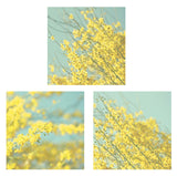 Yellow Flowers Photography Set - Cottage Chic decor - Yellow and Blue photos - Wall Print Collection - Modern Photographs - 3 Photo Set