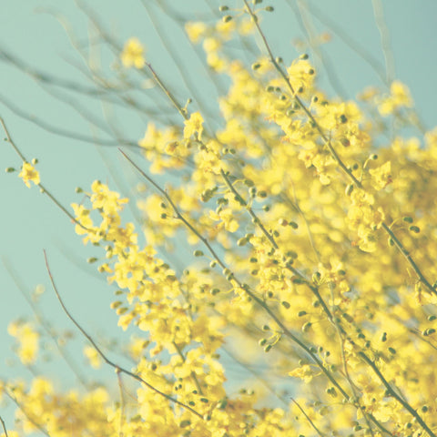 Yellow and Blue Photography - Yellow flower photo - Blooming Tree photograph - Pastel Colors - Nursery Photography - Cottage Chic decor