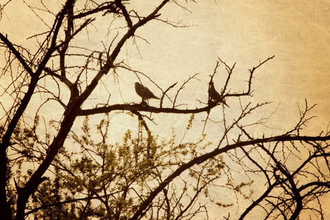 Large Photo Print - Gothic Photography - Bird Photo - Silhouette Art - Tree Photography - gold and brown - bird photograph - Earth tones - Sylvia Coomes