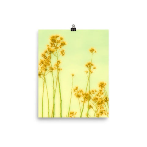 Abstract Yellow Flowers Matte Poster - Sylvia Coomes