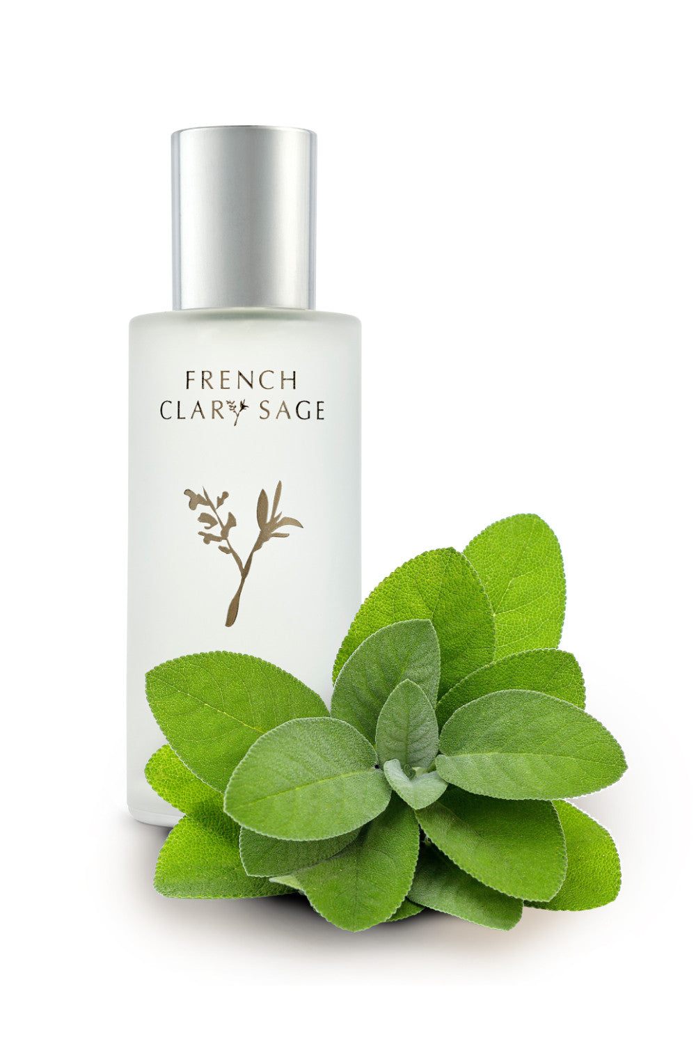 French Clary Sage