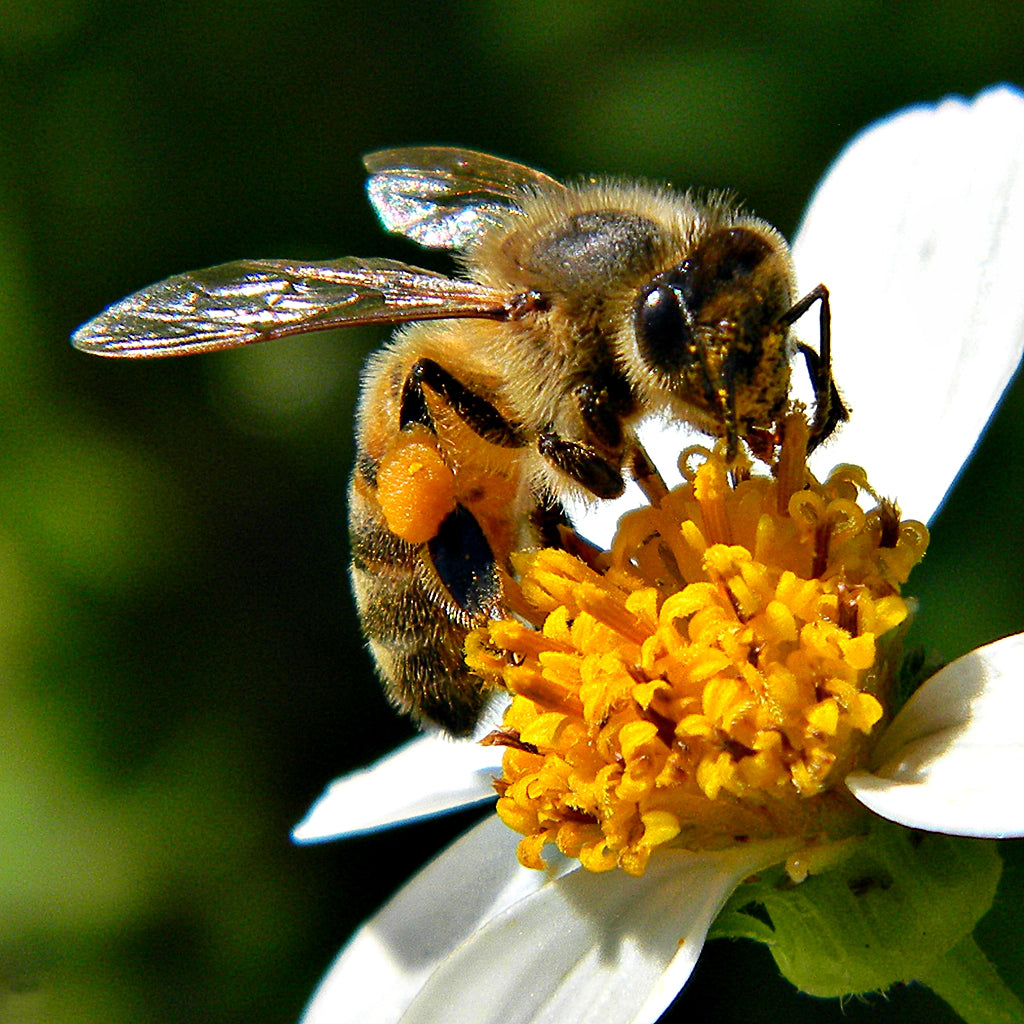 Birks for Bees, Birks for all
