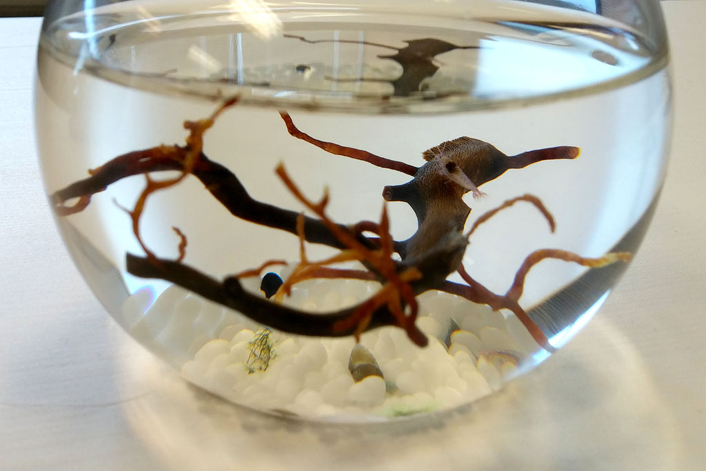Striiv's EcoSphere and shrimps