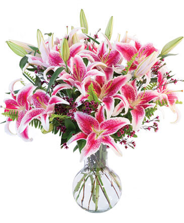 All Starglazer lillies