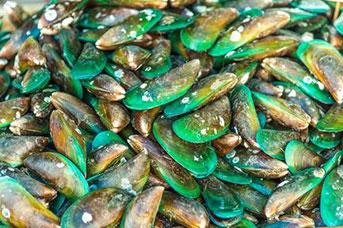 Top 10 Health Benefits of Mussels
