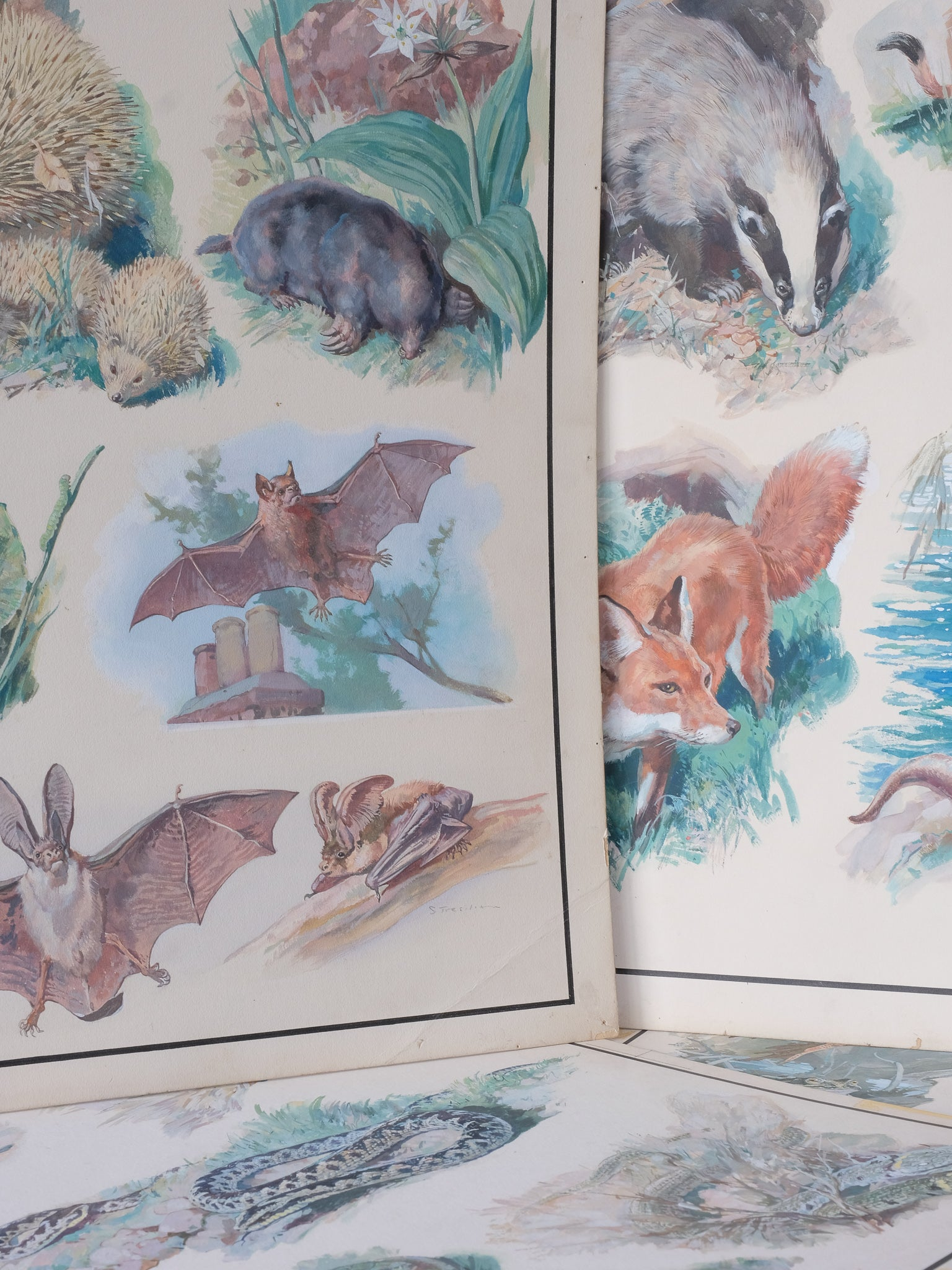 Wildlife Watercolours