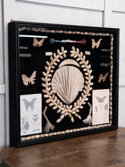 Wall Hanging Silk Moth Display Case