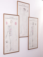 Framed Acupuncture Charts