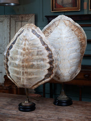 Albino Turtle Shell Lamp