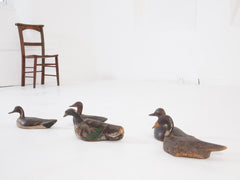 Decoy Ducks