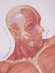 Anatomical