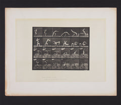 Muybridge Animal Location plate 364