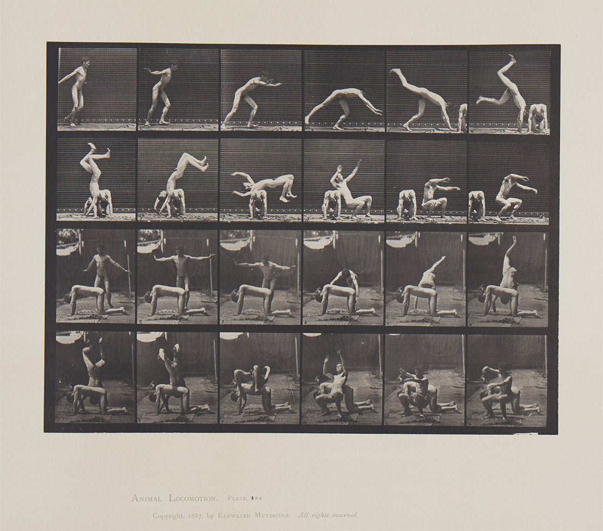 Eadweard Muybridge Animal Location plate 364
