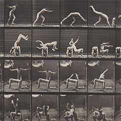 Eadweard Muybridge Animal Location plates for sale