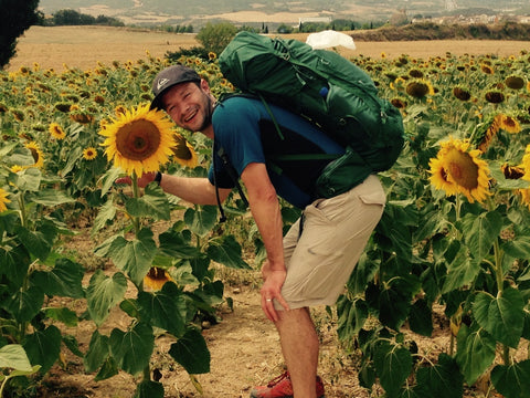 Sunflowers on the Camino