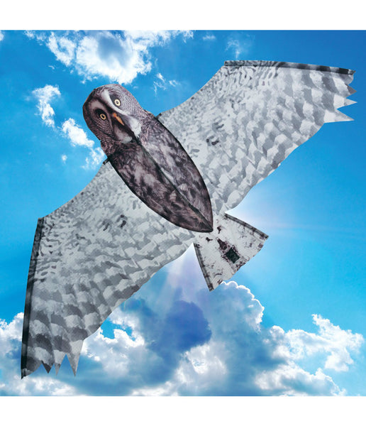 GREY OWL KITE