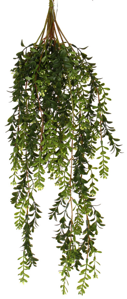 Hanging Boxwood Bush 24in - Paul Michael Company