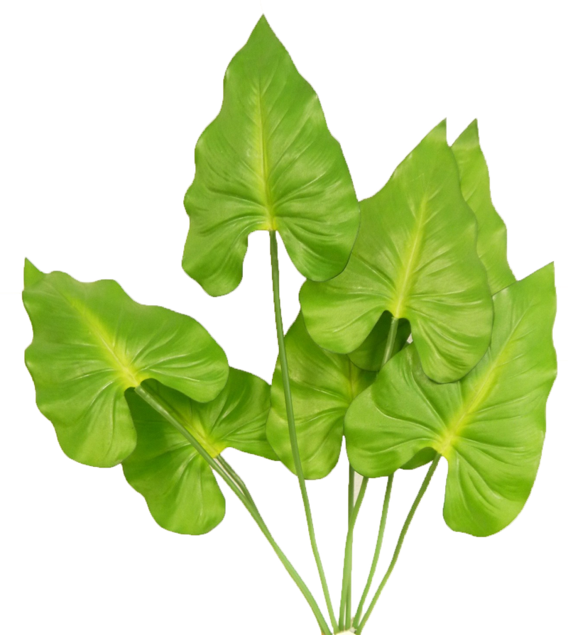 Taro Leaf Bush
