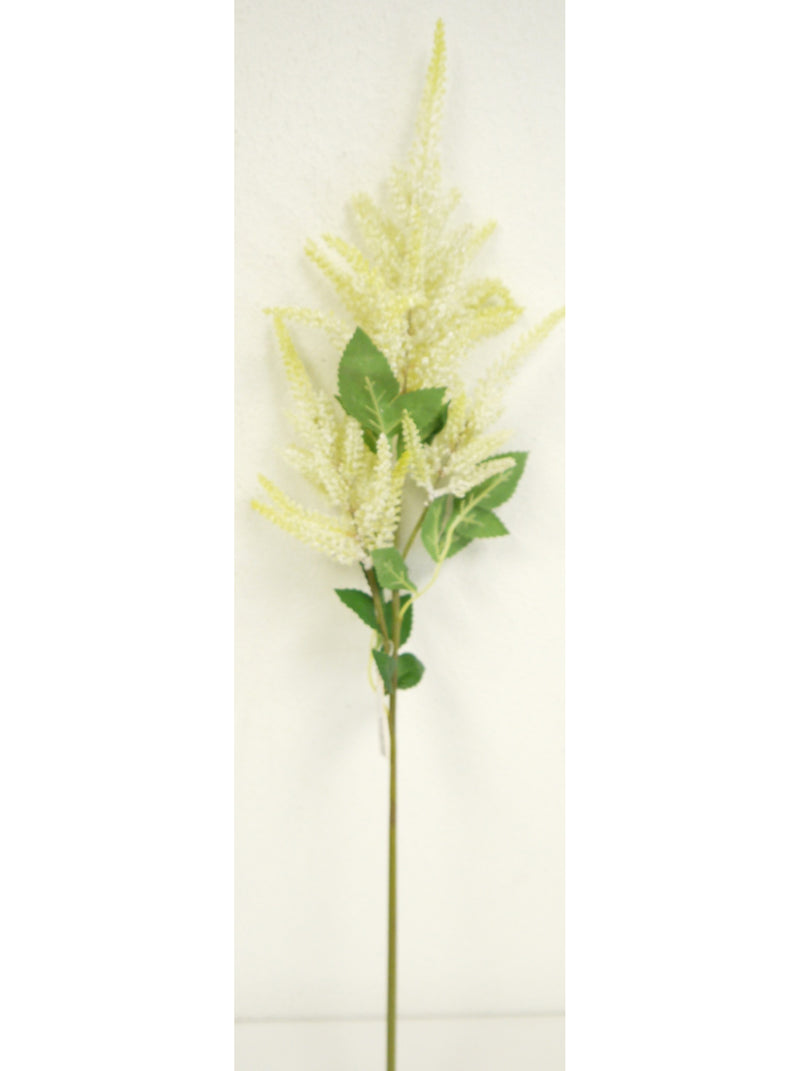 Cream Astilbe Spray