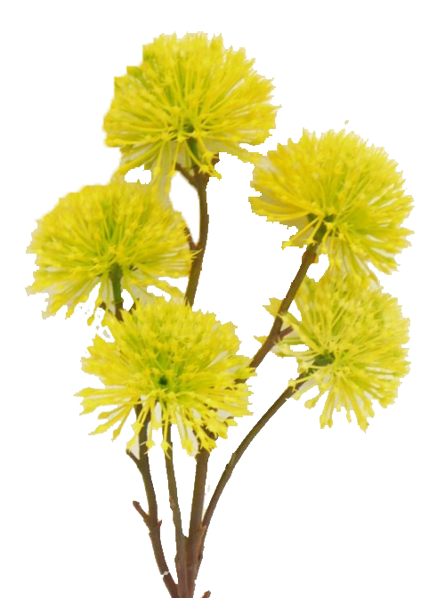 Yellow Pom Pom Spray