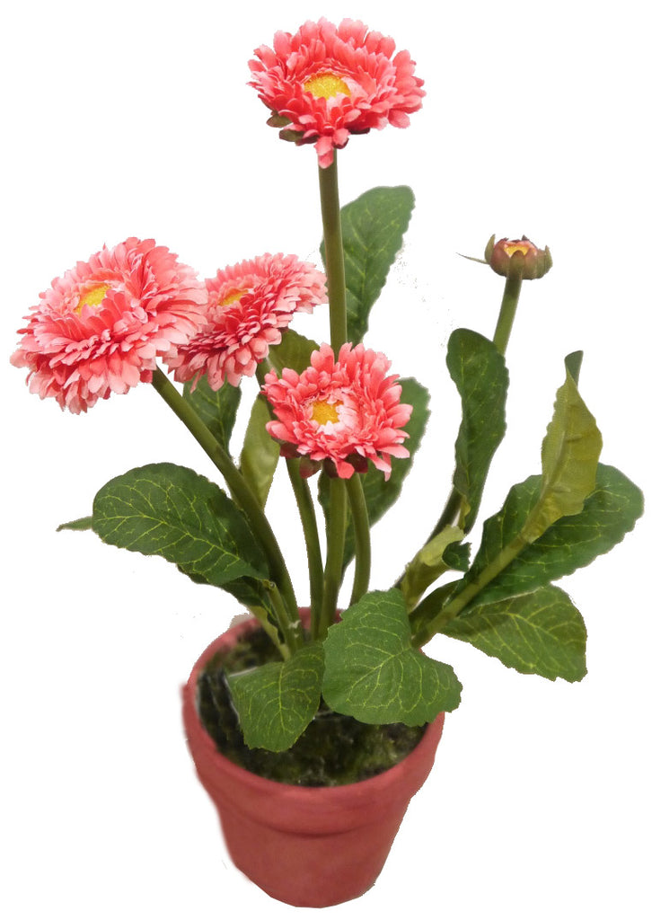 Potted Pink Daisy